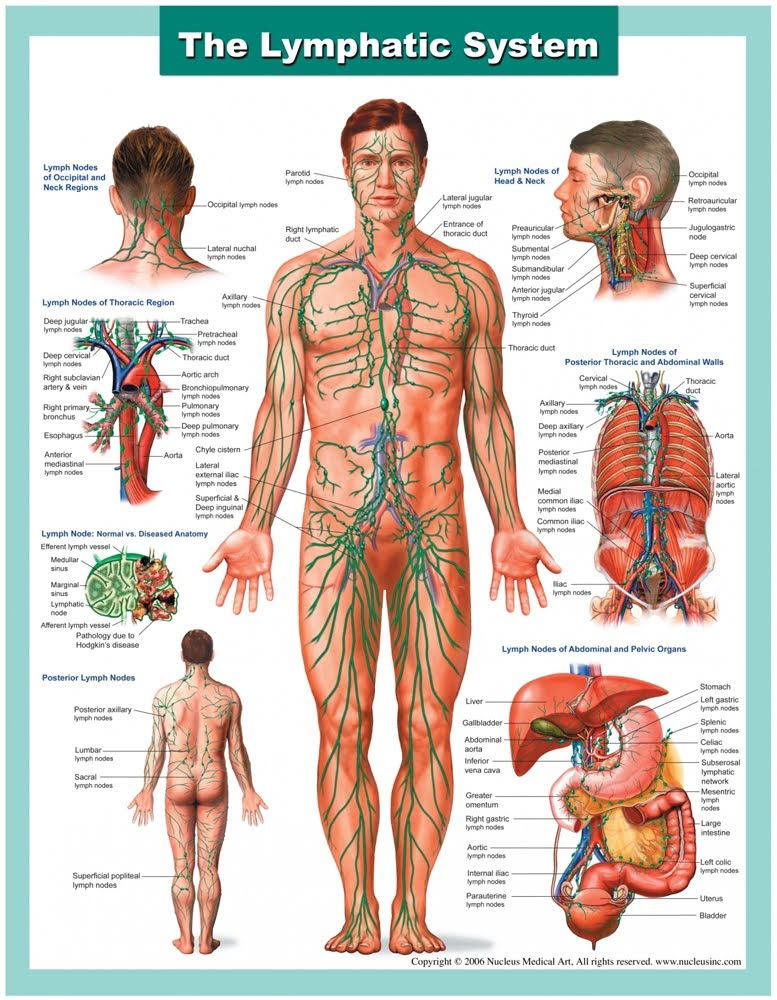 The Lymph Therapy Course
